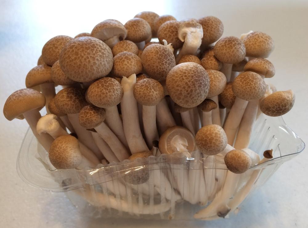 beech, mushrooms, buns shimeji